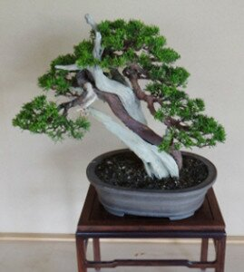 Carving Juniper by Neli Stoyanova